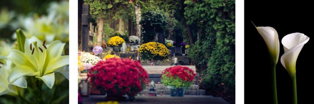 odmiany kwiatów odpowiednich napogrzeb