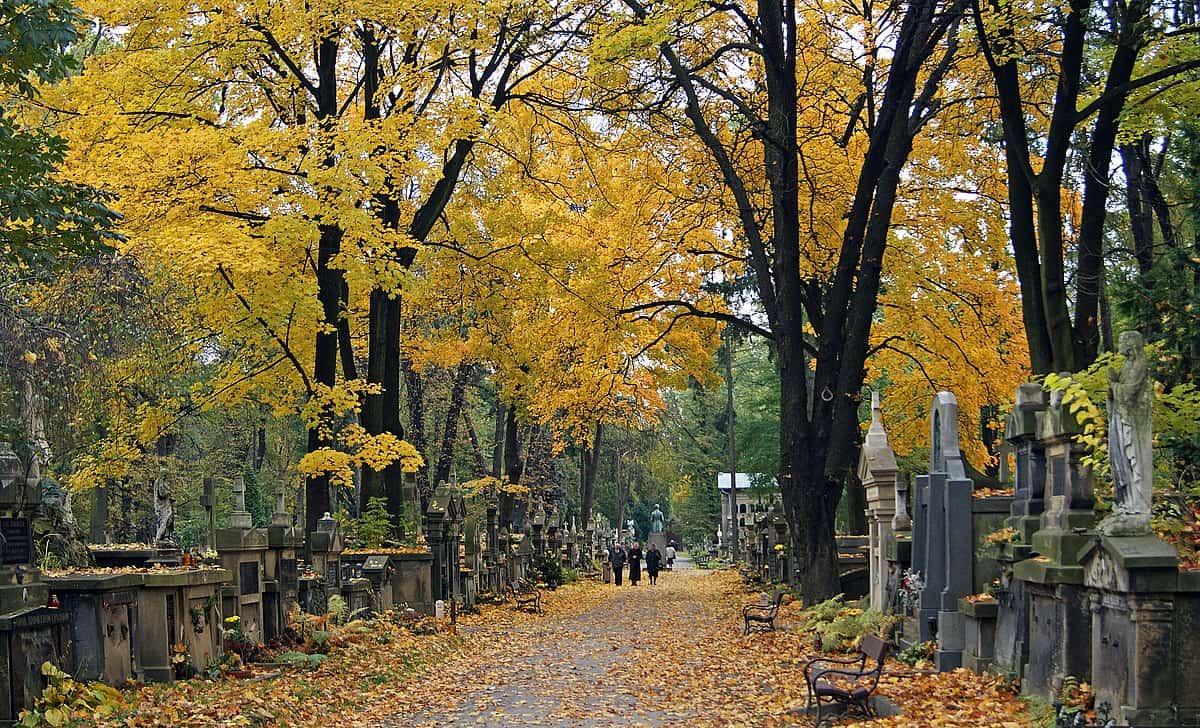 Główna aleja cmentarz rakowcki kraków